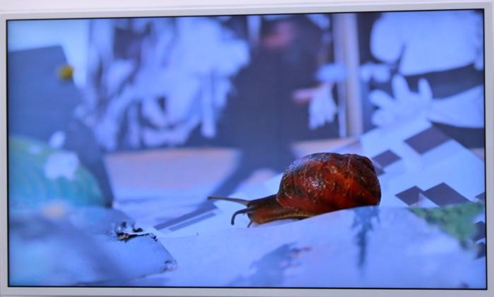 Gastropoda, Joan Fontcuberta, Galerie Angels Barcelona