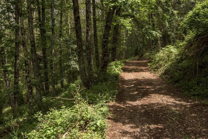 Sentiero all'interno del Parco del Cilento